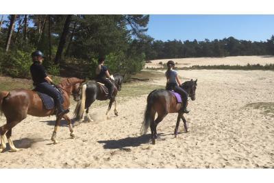 Stal de Besthe, paardenvakantie in het bos!