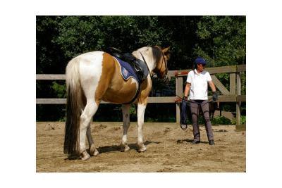 paardenliegenniet_17.jpg
