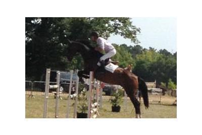harris-horses-2..jpg