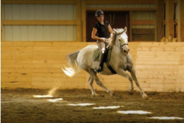 paardenliegenniet_14.jpg