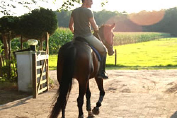 bed_and_breakfast_vaassen_gelderland_bed_en_stal_vakantie_met_uw_paard_op_de_veluwe_80[1].jpg