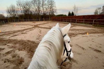 Online trainen van paarden, kan dat?