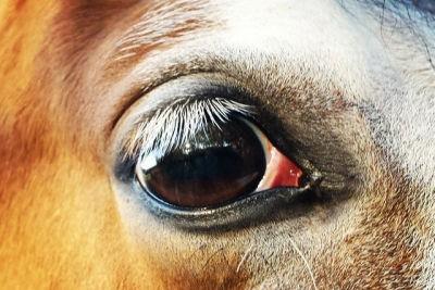 Hoe ik van de angst voor mijn paard afkwam