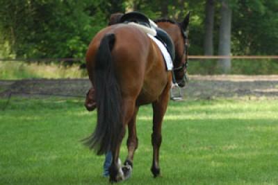 BTW in paardenhouderij