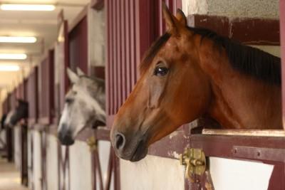 Inspecties paardenwelzijn door NVWA