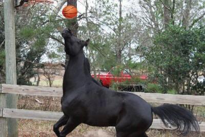 Hoe zorg ik dat mijn paard zich niet verveelt?