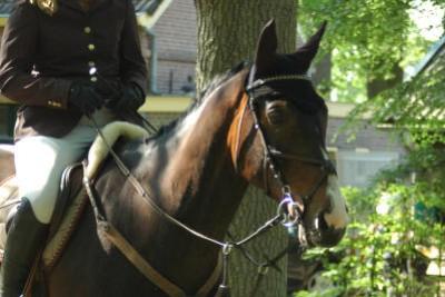 Is je paard slimmer dan je denkt?
