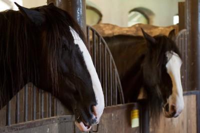 Wonen met paarden