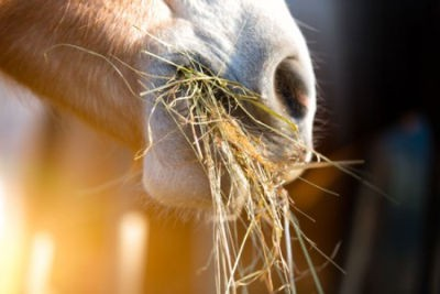 Paardenvoeding: stof tot nadenken